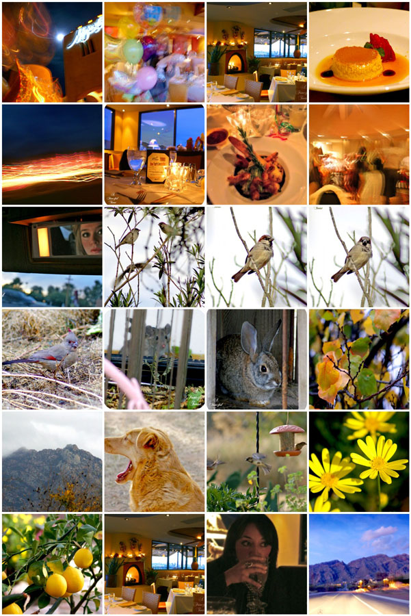 Birthday and critters mosaic 2
