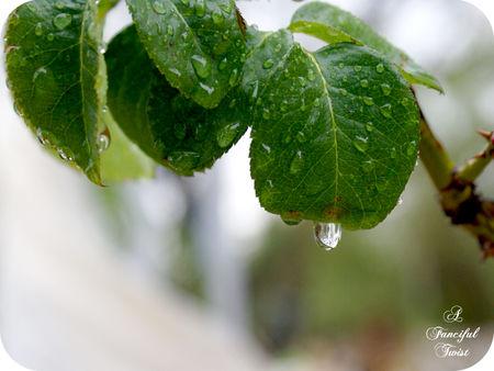 Magic rain 4
