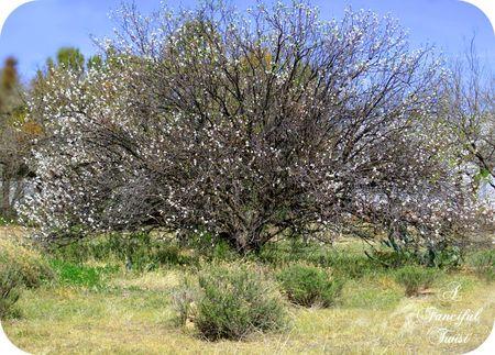 Tree of life 18