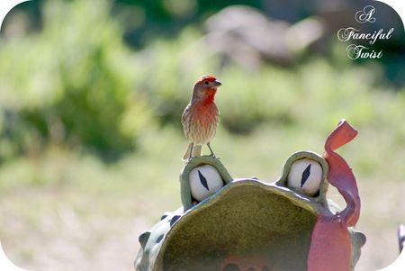 Bird day 8