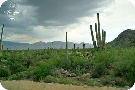 Desert wonderland 5