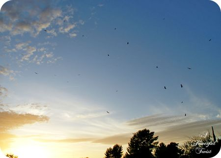 The birds 15