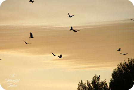 The birds 16