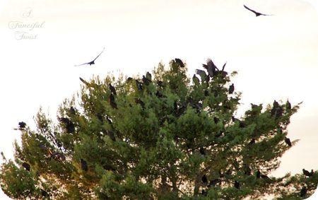 The birds 14