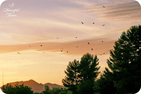 The birds 13