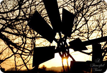 Midnight in the Garden 5