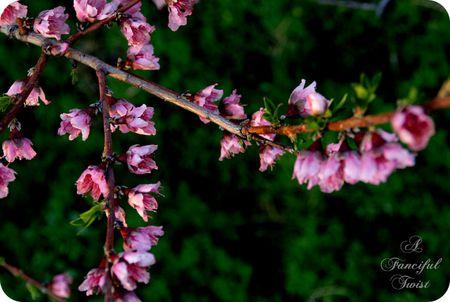 Midnight in the Garden 8