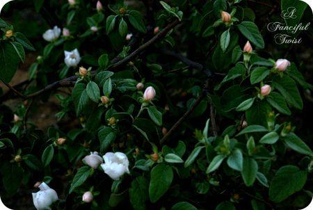 Midnight in the Garden 7