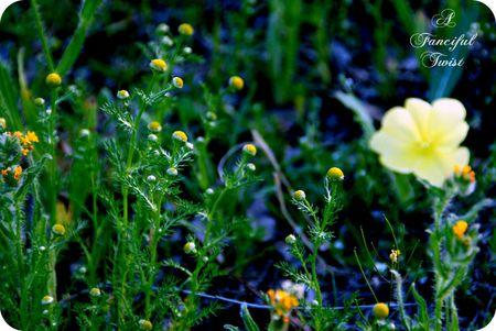 Midnight in the Garden 9