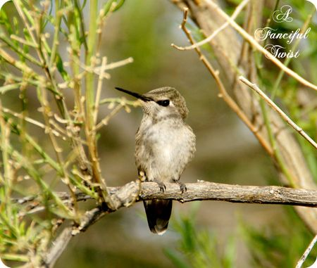 Hummingbird bliss 20