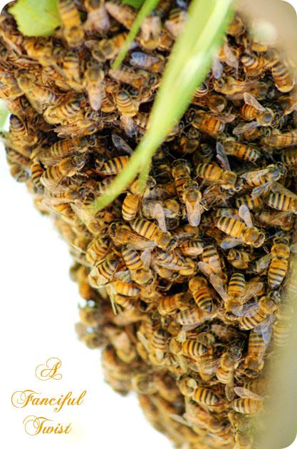 Bee love 4