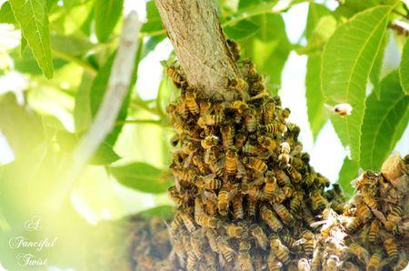 Bee love 7