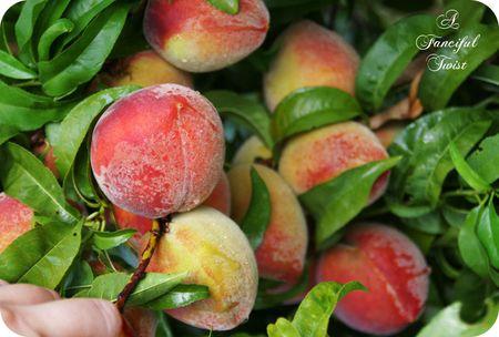 Peachy 1