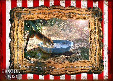 Circus dog 4