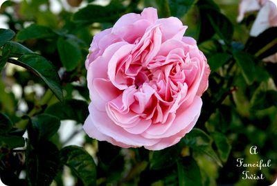 November Flowers 5