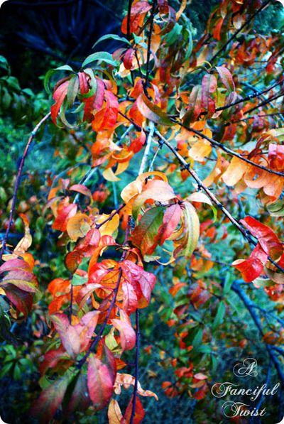 Autumn Pretty 3