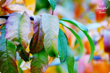 Autumn pretty 12