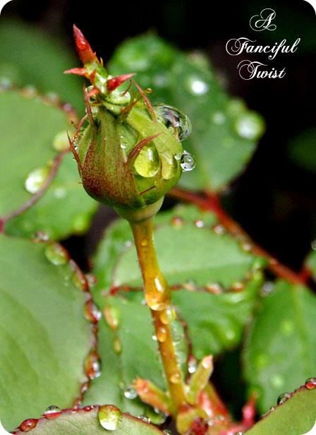 Hummingbird bliss 24
