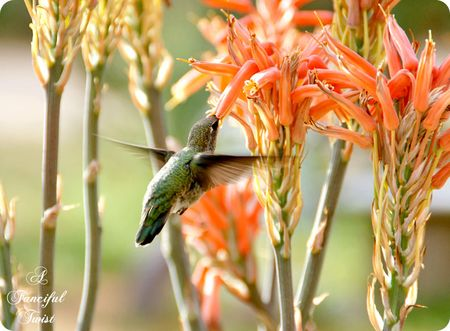 Hummingbird bliss 21
