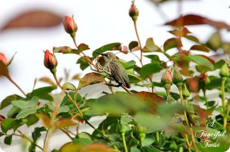 Hummingbird bliss 23