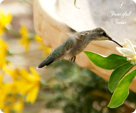 Hummingbird bliss 27