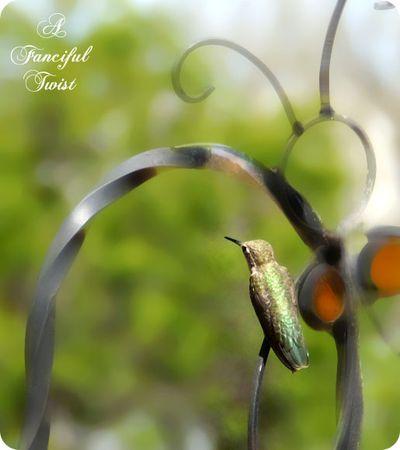 Hummingbird bliss 13
