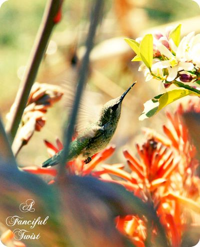 Hummingbird bliss 2