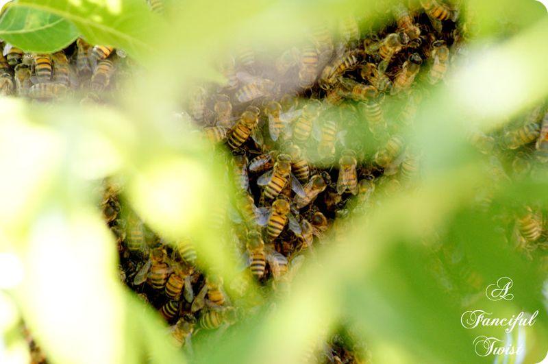 Bee love 3