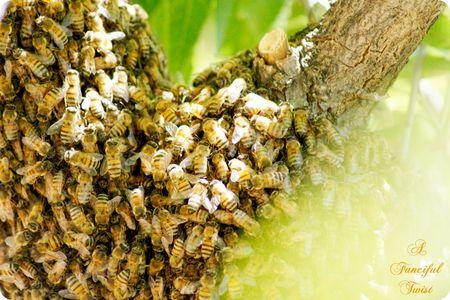 Bee love 5