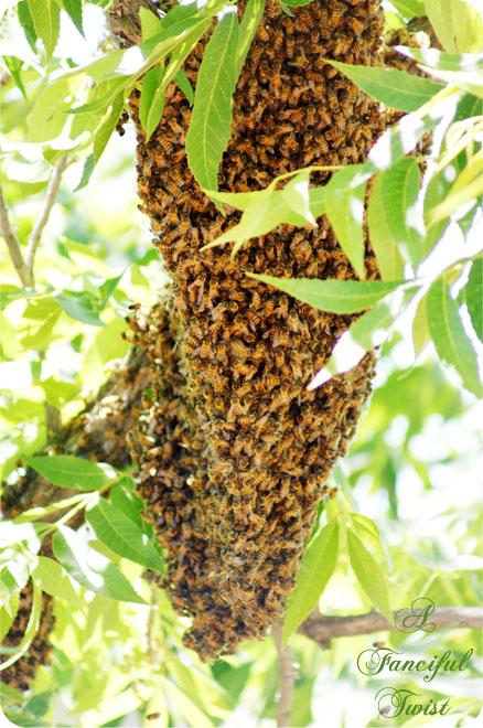 Bee love 9
