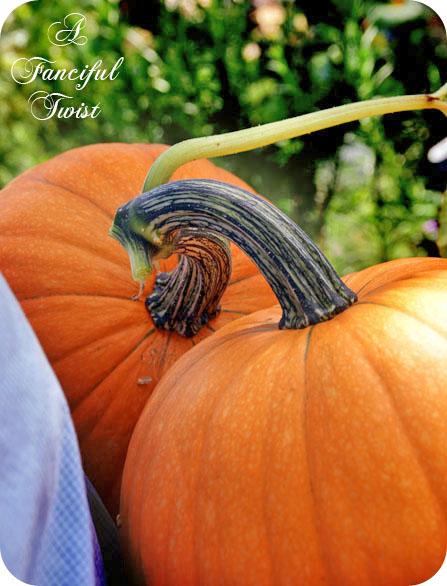 Fall peeks in 4a