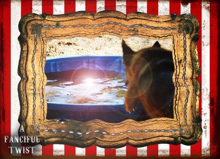 Circus dog 3