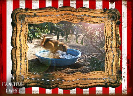 Circus dog 5