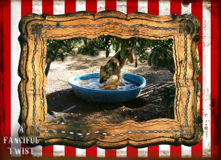 Circus dog 7
