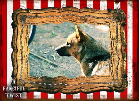Circus dog 1