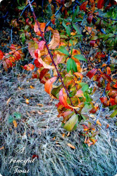 Autumn pretty 1