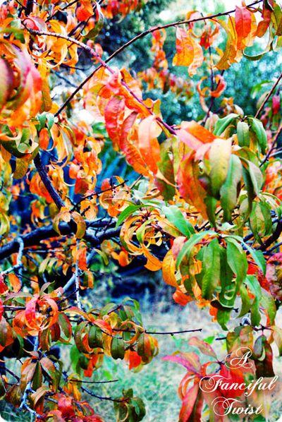 Autumn Pretty 2
