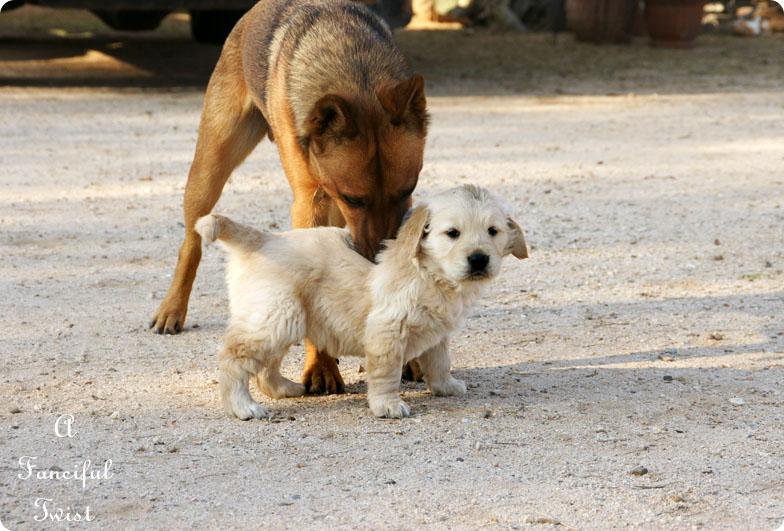 Puppy love 15