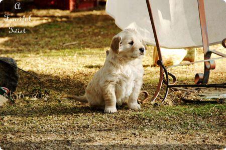 Puppy love 12