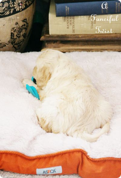 Puppy love 27