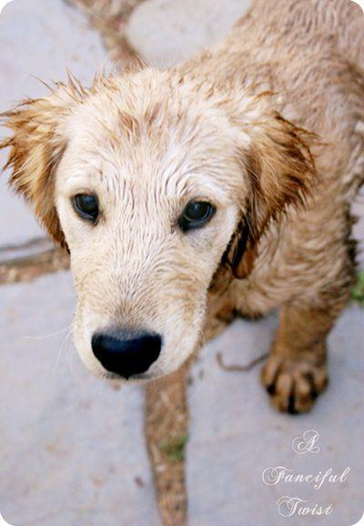 Dirty little dog 2