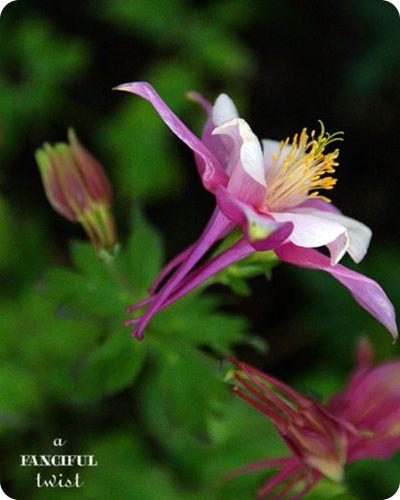 Garden petals 12