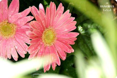 Garden petals 3