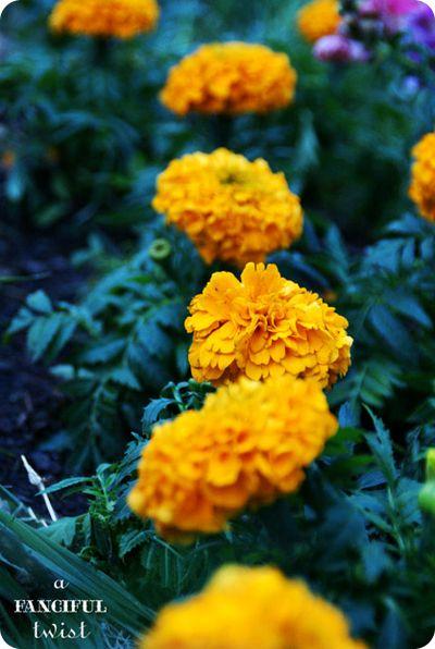 Garden petals 10