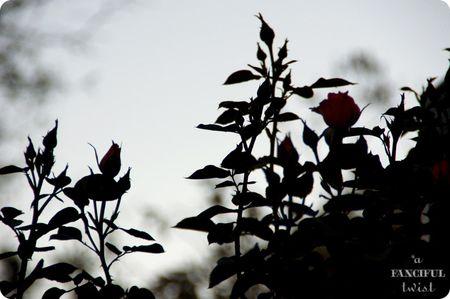 Garden petals 15