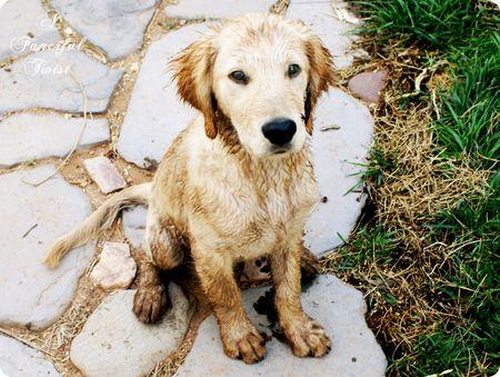 Dirt little dog 1