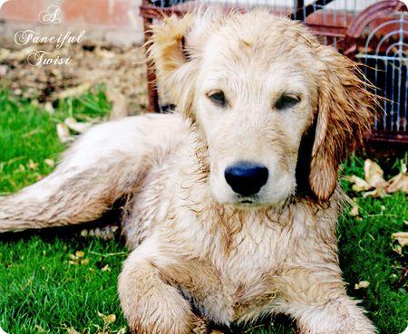 Dirty little dog 4