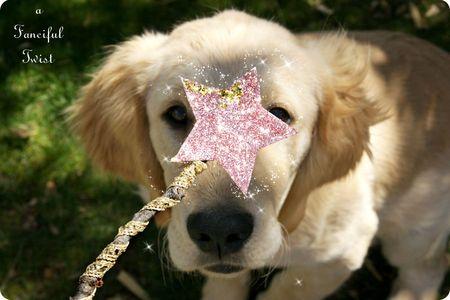 The Stars 6