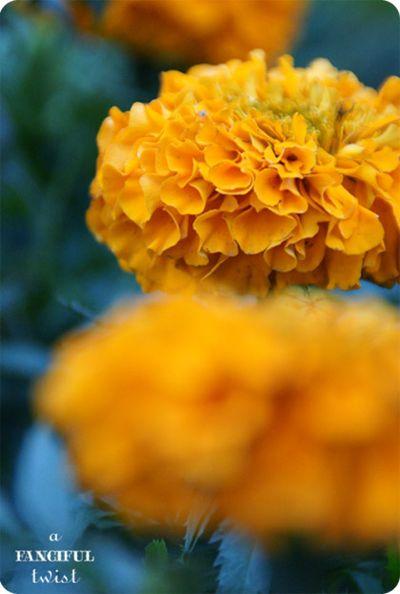 Garden petals 6