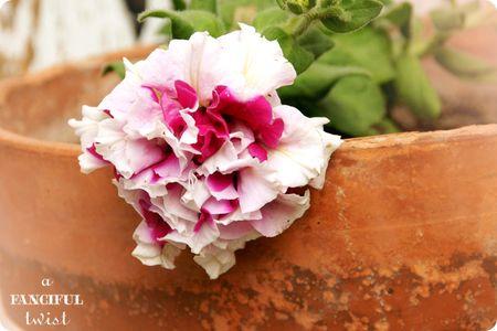 Garden petals 1